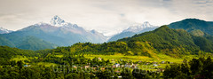 Annapura Panorama (whitworth images) Tags: nepal houses panorama white snow mountains green nature clouds rural buildings landscape outdoors asia rice villages panoramic valley glaciers fields verdant lush himalaya range pokhara annapurna agricultural kaski fishtailmountain machhapuchchhare purunchaur