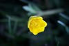 Androceo (CM Guirau) Tags: naturaleza macro primavera canon flor amarillo campo antera androceo