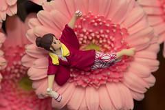 咲いてるフチ子さん (satoshikom) Tags: pink flower kitchen gerbera canonef100mmf28macro canoneos60d canonspeedlite430exii フチ子