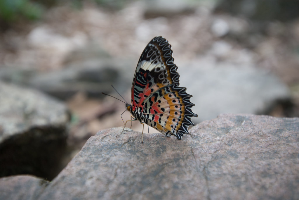 Butterfly, my oh my