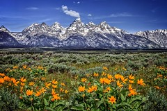 tetons-06-10-15-1 (Ken Folwell) Tags: wyoming tetons landscapes canon5dii jacksonhole landscape outdoor flower