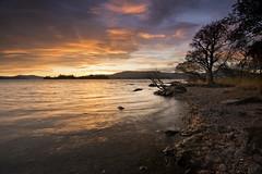 Loch Lomond (Douglas Collinson) Tags: lochlomond national park sunset tree nikon d800 1635 millarochybay balmaha