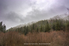 Calm (Constantinos.Cha) Tags: landscape trees snow fog forest calm quiet nikon bulgaria