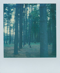 Beaver Creek Ohio 2 (The Stugots) Tags: beaver creek ohio state park green tones nature sx70 sx 70 polaroid instant impossible project color film expired photography roidweek roid week polaroidweek white frame