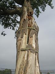 The Royal Oak (amandabhslater) Tags: royaloake boscobelhouse shropshire charlesii civilwar battleofworcester