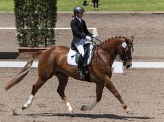161023_Aust_D_Champs_Sun_Med_4.3_6755.jpg (FranzVenhaus) Tags: athletes dressage australia siec equestrian riders horses performance event competition nsw sydney aus
