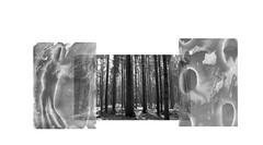 (dragoncello64) Tags: trittico art arte alberi foresta painting