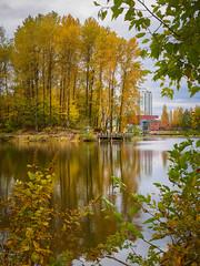 Reflections of Autumn (briantolin) Tags: lafargelakecoquitlam coquitlam lake autumn falltrees october nature foliage