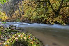 Fall stream (jeff's pixels) Tags: artwolfrainerworkshop mountrainer nation forest stream nature fall autumn creek river long exposure nikon d750 outdoor colors