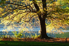 Late Afternoon Magic (FagerstromFotos) Tags: tree trees nature autumn fall yellow leaves branches lake furmanuniversity greenvillesouthcarolina