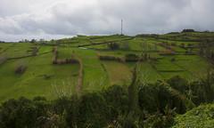 the Azores way of fencing - HFF! (lunaryuna) Tags: azores azoresislands midatlantic portugal faialisland ilhadofaial ilhasazuais landscape agriculture naturalfence hedges hedgesgalore naturalfences puzzlelandscape green fencefriday hff lunaryuna