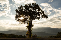 The tree of light (Irina1010) Tags: tree light sun sunrise panorama smokeymountains foothillparkway alpine october nature canon sky clouds rays outstandingromanianphotographers ngc npc