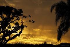 Good day, sunshine.... (Joe Hengel) Tags: socal s sanjuancapistrano sunrise morning morninglight california ca clouds cloudsstormssunsetssunrises cloudy cloudsorangecounty palmtree palm tree trees berm hill goldenstate golden glow sunlight sun orangecounty oc outdoor southerncalifornia