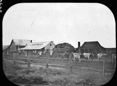 The local store ... for local people (Queensland State Archives) Tags: qsa queensland heritage history archive queenslandstatearchives wagon waggon bullock cow store people building