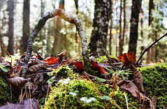 Wonder Arch Hickok MultiUse (Alexander H.M. Cascone [insta @cascones]) Tags: fall autumn multi use new york branch mass twig tree land earth forest island selva nature hickok