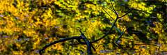 Water Autumn (zilverbat.) Tags: denhaag thehague image haags nature zilverbat postcard cinematic canon herfst vijver leafs bladeren water autumn