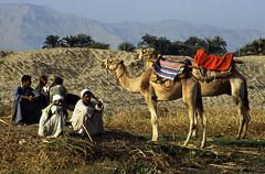 Ägypten 1999 (470) Luxor: Felukenfahrt zur Gezira el-Mozh (Banana Island)
