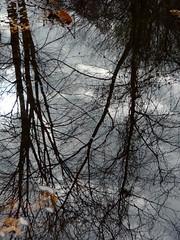 Reflection (Dendroica cerulea) Tags: creek stream brook reflection water autumn irelandbrookconservationarea eastbrunswick middlesexcounty nj newjersey