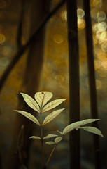 (Anita van Schaik) Tags: bokeh trees forest colours autumn fall botanical plants bubbles nikon nikkor