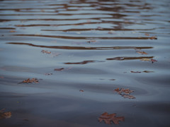 In the end we all fall down (Vincent F Tsai) Tags: water lake ripples leaves autumn walk hike reflection contemplate life art philosophy minolta manual adapted legacy speedbooster panasonic lumixgx8