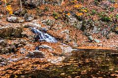 Hilton Area (11-10-16)-044 (nickatkins) Tags: fall fallcolors fallcolor fallfoliage autumn water sun sunlight stream