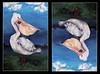 The Repealican, 40 x 62 cm. Donald Duck. (janice maria mancini ys) Tags: trump donald j art artwork illustration 2016 president elect cartoon politics painting portrait sur realismo realism usa america news pelican bird pelikaan repeal republican repealican work mariamanci mariamancini ass asif question artkunst piece trrump thriumph trumpf trumpp duck