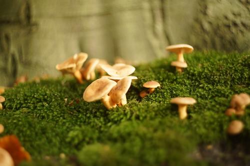 Mushroom - autumn