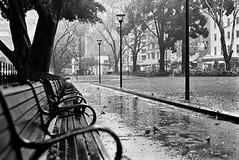 Spare Seats (mrhethro) Tags: pentax pentaxfilm ilford ilfordhp5 35mmfilm sydney vivid rain seats park parkbench deserted alone quiet