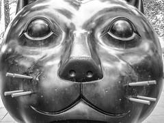 El gat del Raval (KyllerCG) Tags: barcelona cascantic catalonia catalunya elraval elgatdelraval espanha espaa europa europe ogatodoraval spain theravalcat arts blackandwhite cultura culture esculturas sculptures urbanexploration