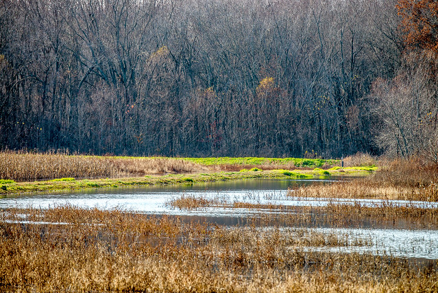 Stillwater Marsh - Monroe Lake - November 26, 2016