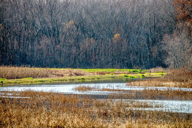 Stillwater Marsh - Monroe Lake - November 26, 2016
