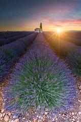 lavander sunrise (JimiaS) Tags: lavender lavande soleil sun sunrise valensole france provence violet purple landscape paysage ngc d800 nikon field champ maisonnette wow creative view ream dreams beauty art morning matin texture été rêve lee calme tree fleur