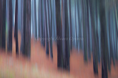 Abstract forest (Alvaro Oporto) Tags: d90 pinar sanlorenzodelescorial landscape escorial bosque forest álvarooporto abstract abantos otoño pine paseo abstracto nikon photo paint helechos