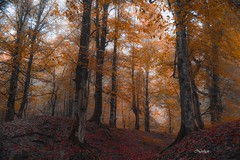 DSC_0112-2 (Noshen.M) Tags: forest tree autumn fall wood trees beautiful jungle iran mazandaran