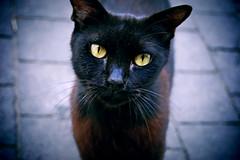 Browny. (ADIDA FALLEN ANGEL) Tags: street cats cute animals fur israel telaviv puppies nikon pussy kittens d40 prrrrr