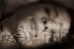Julie rve (ANTHY IOANNIDES) Tags: flowers light bw white black art fleurs photography hands nikon noir photographie artistic body femme dream naturallight lips nb sensual vision imagination mains blanc flou regards feuille levres poesie anthy rve antheia artisticpictures lumierenaturelle d700 ioannides anthyioannides lervedeclara paysagesoniriques wwwanthych antheiaioannou