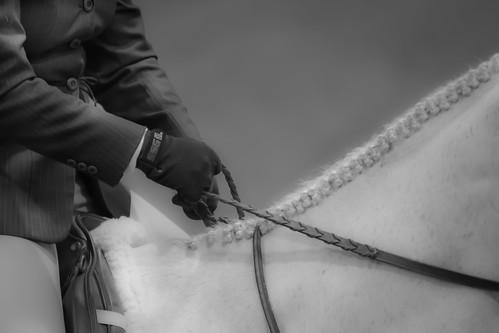horse riding, horse training, hunter jumper, laura kelland-may, horse riding ontario, Thistle ridge Stables,