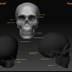 "zbrush-study_skull <a style=""margin-left:10px; font-size:0.8em;"" href=""http://www.flickr.com/photos/95448010@N08/8755028755/"" target=""_blank"">@flickr</a>"