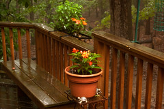 Rainy Day Deck (1) (tommaync) Tags: flower nature oneaday rain tom nc nikon may pot deck photoaday flowerpot pittsboro pictureaday impatien d40 project365 2013 project365134 project365051913