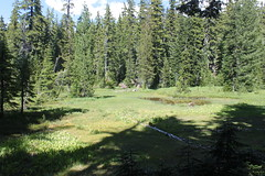 Marshy meadow, on the way out (rozoneill) Tags: lake oregon forest hiking indigo peak diamond national wilderness willamette sawtooth umpqua timpanogas wsweekly42