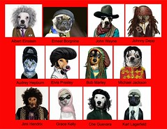 Celebrity Look Alikes (Keshet Kennels & Rescue) Tags: dog pet pets ontario canada game dogs animal animals ottawa interactive kennel adoption bloodbank kennels dogrescue keshet dogadoption largebreeddogs keshetrescue keshetkennels