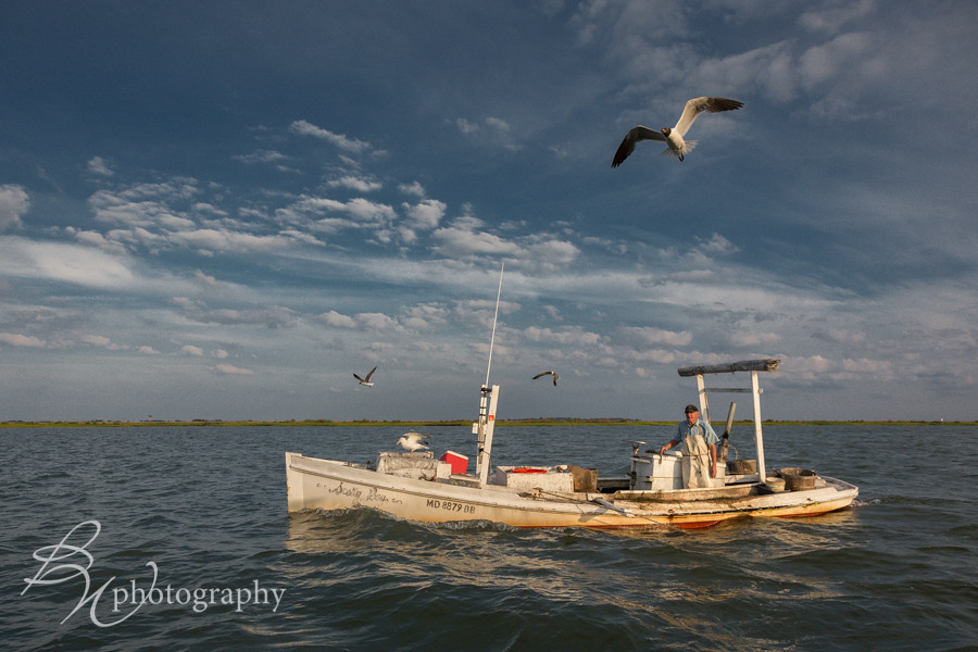 The world 39 s best photos of chesapeake and waterman for Chesapeake bay fishing