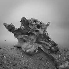 """Deid Tree"", well root! (""Flashman"") Tags: bw beach monochrome infrared root midday balmaha leefilters millarochybay bigstopper deidtree formtexture formandtexture"
