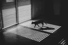 (Alessio Albi) Tags: shadow window silhouette cat dark key low thecatwhoturnedonandoff ldlnoir