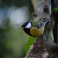 avianexcellence gardenbirdrevival