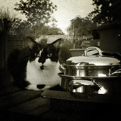 (232/366) Camping Out! (Cathy G) Tags: camera bw home cat movie moving silent farm packing hampshire hollywood squareformat odiham iphone smodge 366 iphone5 232366 iphoneography