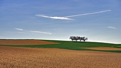 (Four in a Row) early Spring Edition (Sp.ard) Tags: tag feld wiese wolken landschaft ries 2015 baumgruppe frühjahr nördlingen