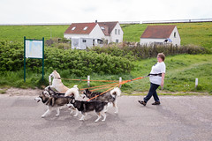 (Peter de Krom) Tags: woman dogs dutch coast group sled pulling dike dragging petten littledoglaughedstories