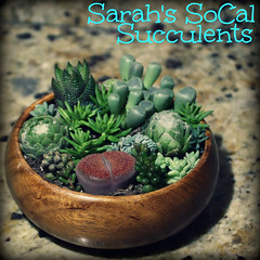 Mini Seascape (Sarah B in SD) Tags: green design sandiego artistic socal sanmarcos succulents csusm thrifted droughttolerant lithop upcycled succulove sarahssocalsucculents