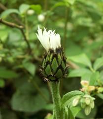 biay chaber (Grazka-M-T) Tags: flowers nature garden foto abigfave